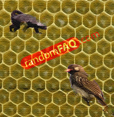 honeyguide bird and ratel symbiotic relationship