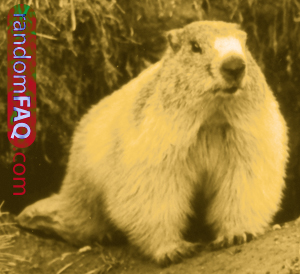 Groundhog Hibernation